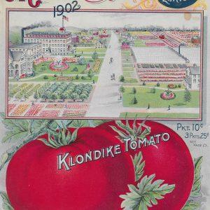 #3909 Klondike Tomato, 1902