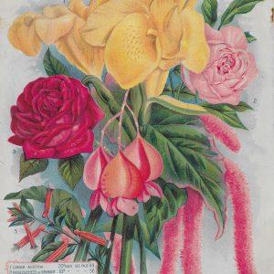 #3909a F.B. Mills Flowers, 1902