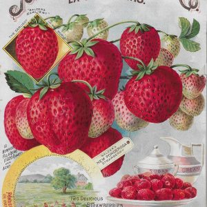 #3910 Strawberries, 1895