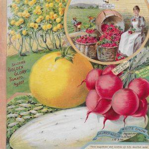 #3911 Salzer Tomato, 1895