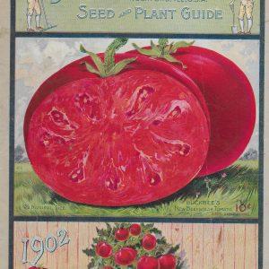 #3912 Tomatoes, 1902