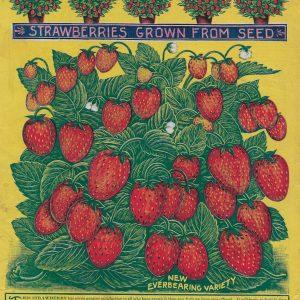 #3916 Strawberries, 1909